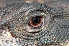Fim acima do olho dos lagartos Fotografia de Stock Royalty Free