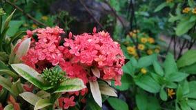 Fim acima dos papéis de parede frescos as flores vermelhas fotografia de stock royalty free