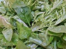 Fim acima: Mistura de folhas verdes orgânicas frescas da alface Foto de Stock