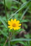 Fim amarelo da flor acima Imagem de Stock