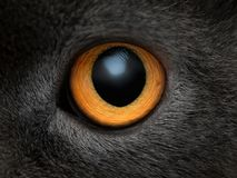 Fim amarelo do olho de gato acima Fotografia de Stock Royalty Free