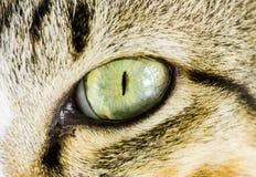 Fim asiático do olho de gato acima Fotos de Stock Royalty Free