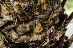 fim até a casca de uma palmeira, fundo textured de uma palmeira natural foto de stock