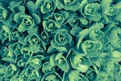 Fim brilhante bonito e calmo acima da foto das plantas com com cuidado ajardinar Fotos de Stock Royalty Free