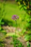 Fim brilhante bonito e calmo acima da foto das plantas e das flores com com cuidado ajardinar Fotos de Stock Royalty Free