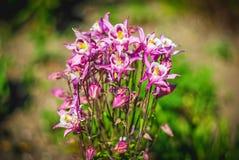 Fim brilhante bonito e calmo acima da foto das plantas e das flores com com cuidado ajardinar Imagens de Stock Royalty Free