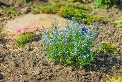 Fim brilhante bonito e calmo acima da foto das plantas e das flores com com cuidado ajardinar Fotos de Stock