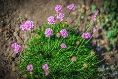Fim brilhante bonito e calmo acima da foto das plantas e das flores com com cuidado ajardinar Fotografia de Stock Royalty Free