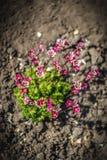 Fim brilhante bonito e calmo acima da foto das plantas e das flores com com cuidado ajardinar Imagem de Stock