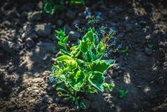 Fim brilhante bonito e calmo acima da foto das plantas e das flores com com cuidado ajardinar Imagem de Stock Royalty Free