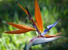 Fim colorido da flor acima Foto de Stock Royalty Free