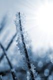 Fim congelado da grama acima Imagem de Stock