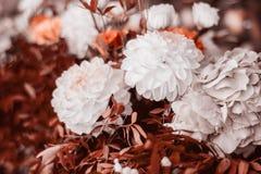 Fim coral vivo bonito do ramalhete das flores acima imagens de stock