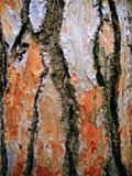 Fim da árvore de casca acima Foto de Stock