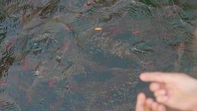 Fim da alimentação de peixes acima video estoque