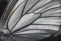 Fim da asa da borboleta acima Foto de Stock