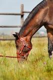 Fim da cabeça de cavalo acima Imagens de Stock