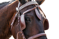Fim da cabeça de cavalo isolado no branco Fotos de Stock