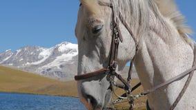 Fim da cara do cavalo branco acima de 4k vídeos de arquivo