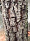 Fim da casca de árvore acima Fotos de Stock Royalty Free