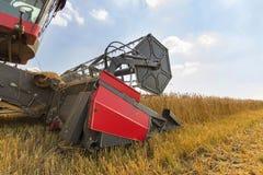 Fim da ceifeira de liga acima Ceifeira de liga que colhe o trigo Grão que colhe a liga Trigo da colheita mecanizada Campo de trig Foto de Stock Royalty Free