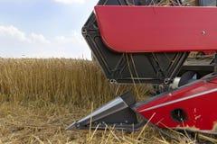 Fim da ceifeira de liga acima Ceifeira de liga que colhe o trigo Grão que colhe a liga Trigo da colheita mecanizada Campo de trig Fotografia de Stock