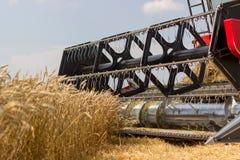 Fim da ceifeira de liga acima Ceifeira de liga que colhe o trigo Grão que colhe a liga Trigo da colheita mecanizada Campo de trig Imagem de Stock Royalty Free