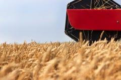 Fim da ceifeira de liga acima Ceifeira de liga que colhe o trigo Grão que colhe a liga Trigo da colheita mecanizada Campo de trig Imagem de Stock