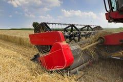 Fim da ceifeira de liga acima Ceifeira de liga que colhe o trigo Grão que colhe a liga Trigo da colheita mecanizada Campo de trig Fotos de Stock