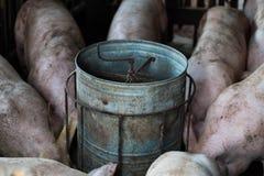 Fim da exploração agrícola de porco acima Foto de Stock Royalty Free