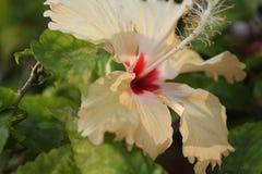 Fim da flor branca acima e fundo da folha imagens de stock