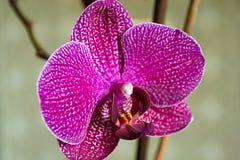 Fim da flor da orquídea acima Fotos de Stock