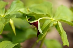 Fim da flor selvagem de tempo de mola acima foto de stock royalty free