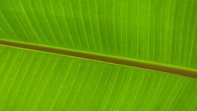 Fim da folha da banana acima ilustração do vetor