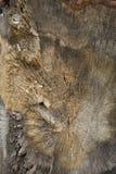 Fim da madeira do tronco de árvore acima Foto de Stock Royalty Free