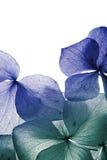 Fim da pétala da flor acima Imagens de Stock