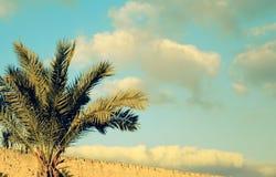 Fim da palmeira da data acima contra o céu imagens de stock royalty free