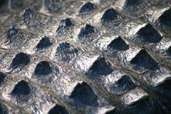 Fim da pele do crocodilo acima imagem de stock