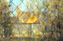 Fim da temporada de verão Folha amarela do outono que pendura na rede do metal Imagem de Stock Royalty Free