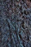 Fim da textura da casca de árvore acima Foto de Stock Royalty Free