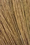 Fim da textura da grama da vara da vassoura acima do fundo da vista Fotos de Stock Royalty Free
