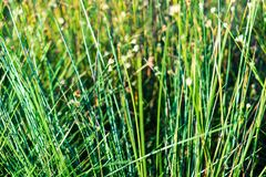 fim da vegetação do pântano acima com curvaturas e folha da grama foto de stock
