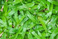 Fim da vista superior acima da luz - grama verde no quintal na manhã imagens de stock
