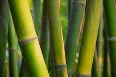 Fim de bambu acima no bosque de bambu fotografia de stock royalty free