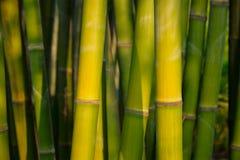 Fim de bambu acima no bosque de bambu imagem de stock