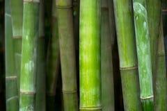 Fim de bambu acima no bosque de bambu imagens de stock royalty free