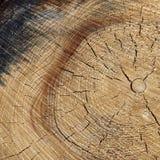 Fim de madeira velho da textura do quadro do quadrado da grão da cor natural acima Imagens de Stock Royalty Free