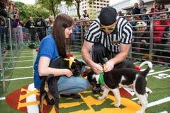 Fim de semana animal do Super Bowl da bacia do cachorrinho do planeta Foto de Stock Royalty Free