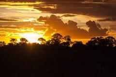 Fim de um Safari-dia, por do sol atrás das árvores em África Fotos de Stock