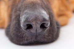 Fim do açaime do cão acima Foto de Stock Royalty Free